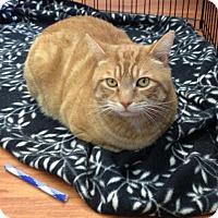 Adopt A Pet :: Ginger - Hamilton, ON