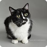 Adopt A Pet :: Duncan - Eagan, MN