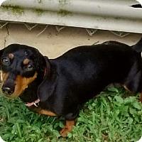 Adopt A Pet :: Snookie - Georgetown, KY
