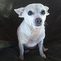 Adopt A Pet :: Kiki - Temecula, CA