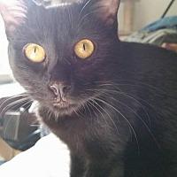 Adopt A Pet :: Kismet - Santa Monica, CA