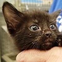 Adopt A Pet :: Salvador - Kalamazoo, MI