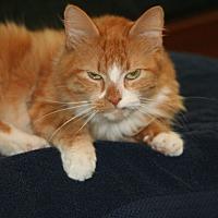Adopt A Pet :: Rusty - Parkland, FL