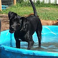 Adopt A Pet :: Kona - Snow Hill, NC