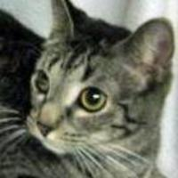 Adopt A Pet :: Luvs / Lovie - Tilton, IL