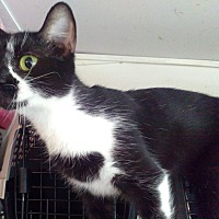 Adopt A Pet :: Cheryl - Morganton, NC