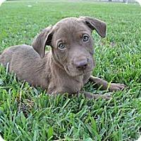 Adopt A Pet :: Magnolia - New Boston, MI