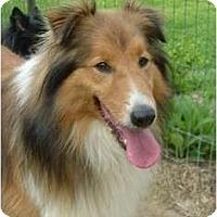 Adopt A Pet :: Brady - Indiana, IN