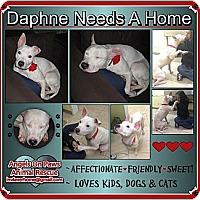 Adopt A Pet :: Daphne - Northfield, NJ