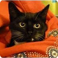 Adopt A Pet :: Banff - Fredericton, NB