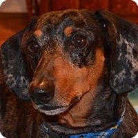 Adopt A Pet :: Skeeter - Bryan, TX