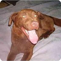 Adopt A Pet :: Charlie - North Jackson, OH