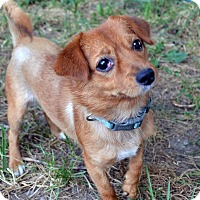 Adopt A Pet :: Tay Tay - Westfield, IN