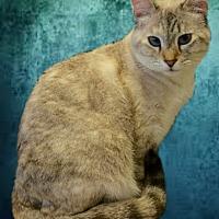 Adopt A Pet :: Kyipo - Tucson, AZ