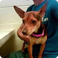 Adopt A Pet :: LEXI - Conroe, TX