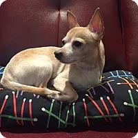 Adopt A Pet :: Frankie - Hamilton, ON