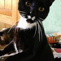 Adopt A Pet :: STASH - Pena Blanca, NM