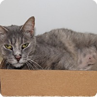 Adopt A Pet :: Staci - Greensboro, NC