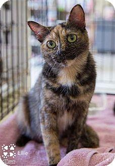 Calico Cat for adoption in Merrifield, Virginia - Ellie