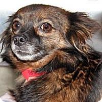 Adopt A Pet :: Fifi - Wildomar, CA