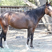 Adopt A Pet :: Kiwi - El Dorado Hills, CA