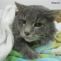 Adopt A Pet :: Rascal - Chisholm, MN