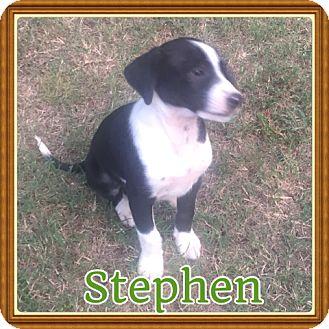 Terrier (Unknown Type, Medium) Mix Puppy for adoption in Brattleboro, Vermont - Stephen
