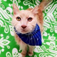 Adopt A Pet :: Earl - Spokane, WA