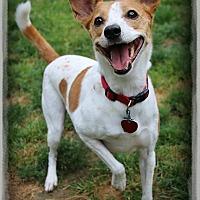 Adopt A Pet :: Samantha - Shippenville, PA