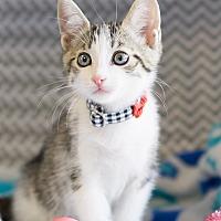 Adopt A Pet :: Teo - Montclair, CA