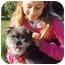 Photo 3 - Yorkie, Yorkshire Terrier Mix Dog for adoption in El Cajon, California - sparkles