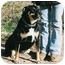 Photo 2 - German Shepherd Dog/Rottweiler Mix Dog for adoption in California City, California - Dutchess
