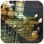 Photo 4 - Beagle/Terrier (Unknown Type, Small) Mix Dog for adoption in Blanchard, Oklahoma - Cindy