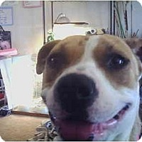 Adopt A Pet :: Fantasia - Flint (Serving North and East TX), TX