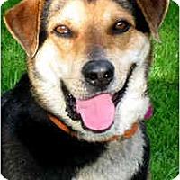 Adopt A Pet :: SPENCER - Wakefield, RI