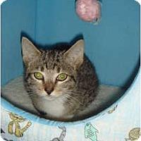 Adopt A Pet :: Arnold - Orlando, FL