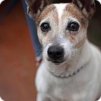 Adopt A Pet :: Rainey - Tinton Falls, NJ