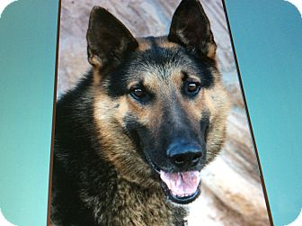 German Shepherd Dog Dog for adoption in Los Angeles, California - JUSTIN VON JESSEN