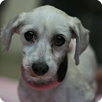 Adopt A Pet :: Rosebud - Canoga Park, CA