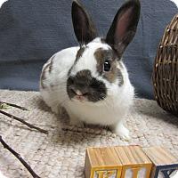 Adopt A Pet :: Kix - Newport, DE