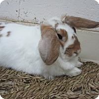 Adopt A Pet :: Irena - Newport, DE