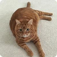 Adopt A Pet :: Willie - Harrisonburg, VA