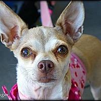 Adopt A Pet :: Ginger - Vista, CA