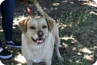Beagle Mix Dog for adoption in Gridley, California - Buttercup