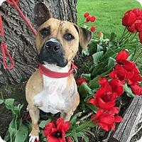 Adopt A Pet :: Morton - Villa Park, IL