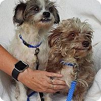 "Adopt A Pet :: Opie & Andy ""Lil' Sweeties!"" - Niagara Falls, NY"