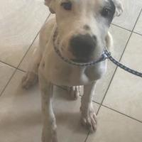 Terrier (Unknown Type, Small) Mix Dog for adoption in St. Thomas, Virgin Islands - GUNNER