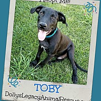 Adopt A Pet :: TOBY - Lincoln, NE
