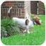 Photo 4 - Basset Hound Dog for adoption in Montgomery, Alabama - Scout
