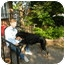 Photo 1 - Rottweiler/Doberman Pinscher Mix Dog for adoption in West Deptford, New Jersey - Simon